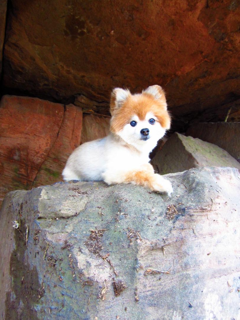 Corbin in the Foxes Den
